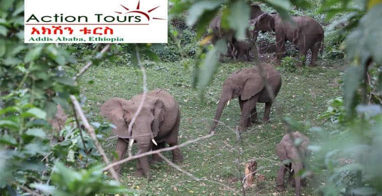 Visit Chebera Churchura National Park, Maze National Park, Omo Valley Tribes, Mago Park , Omo National Park