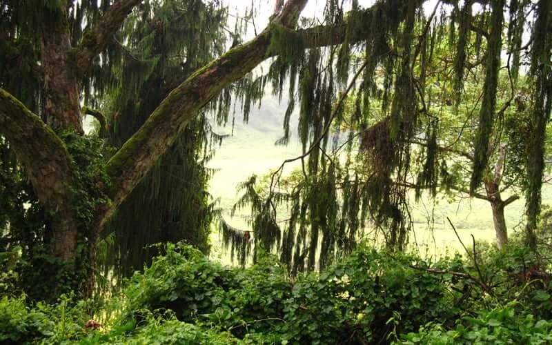High-Altitude-Trees