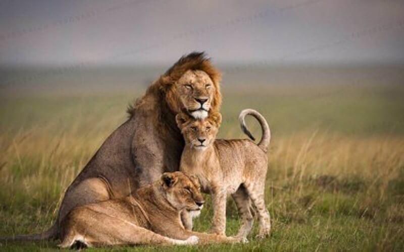 Visit Ethiopia, Kenya, Serengeti National Park,Maasai Mara Wildlife Reserve